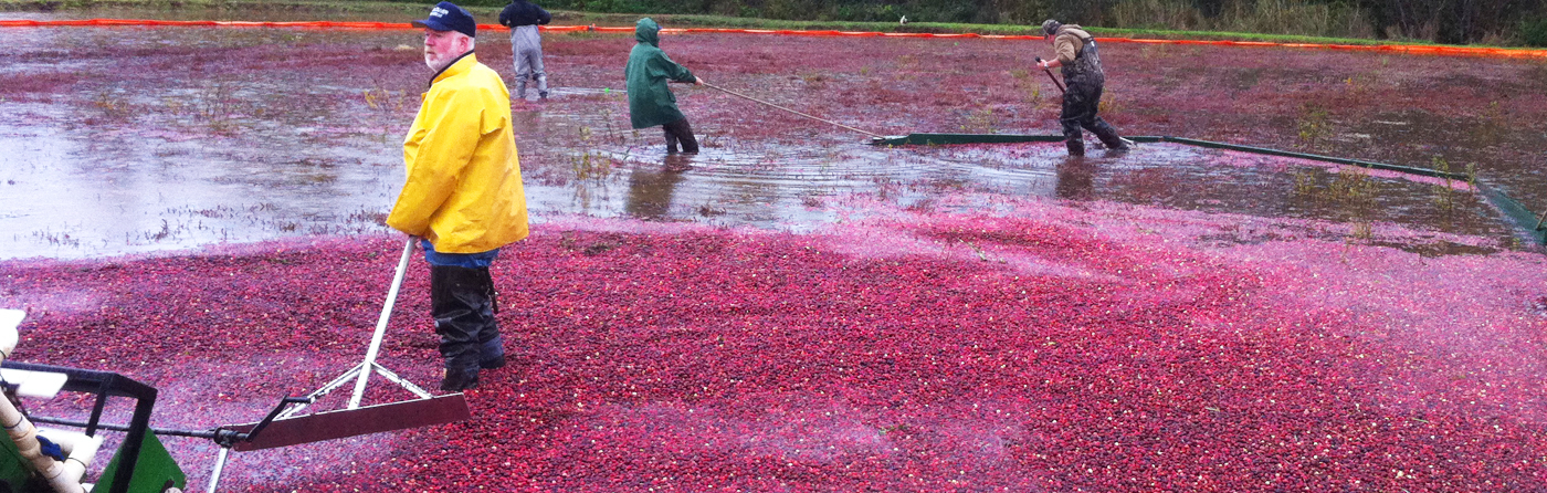 Boost Organic Cranberry Yields